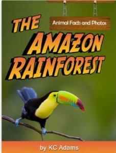 amazonrainforest,pic