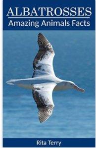 albatrosspic